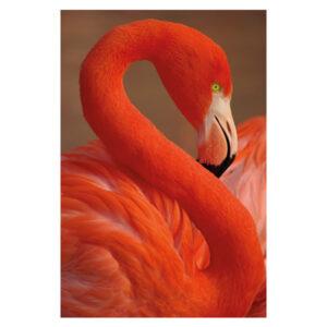 Mondiart-Flamingo